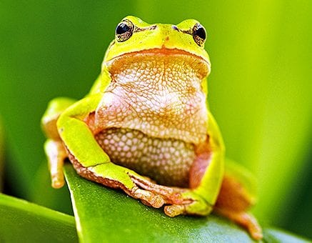 Amphibian Care Sheets