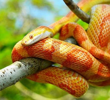 Snake Care Sheets