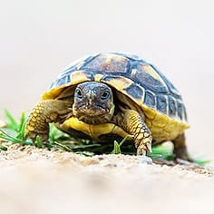 Tortoise Care Sheet